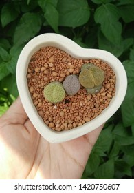 Lithops exotic planting in a heart shaped pot