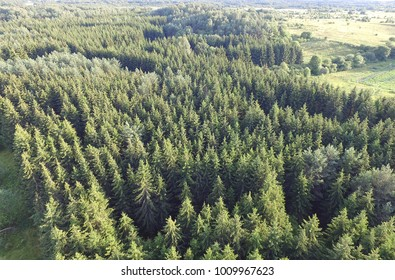 Lithuanian forest birds eye view - Green forest aerial photo - Forestry industry drone photo