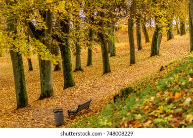 A Lithuanian park during autumn, when the leaves are drying