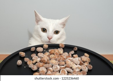 Lithuanian Traditional Christmas Eve Dish - Small, delicious sweets made of tanned pasta and poppy,kuciukai.A white cat sits at the Christmas table.