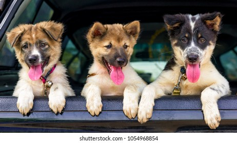 Litter of Puppies in pickup.