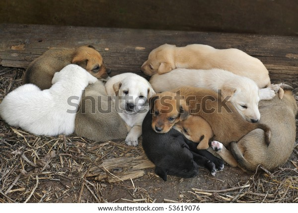 A litter of ten cute little puppies huddled together for warmth.