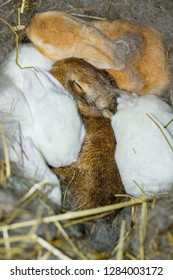 Litter of Two Week Old Flemish Giant Baby Bunnies Nest Box Rabbits