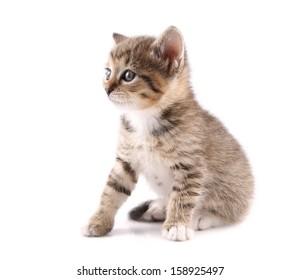 Little 30 day old kitten
