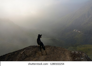 Little Adams Peak in Ella. A dog overlooking the valley with mountains around Ella from a steep rock on a cliff called little adams peak. Near Ella Gap. Ella, Sri Lanka