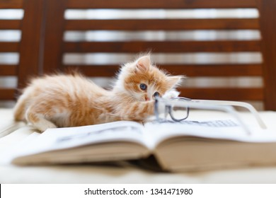 kitty images stock photos  vectors  shutterstock