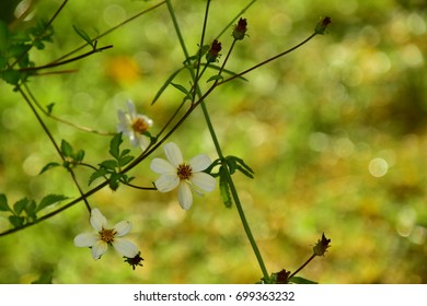 Little aerial white flowers with a yellow and green bokey in the background