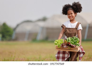 Little African American curly hair girl farmer holding basket of fresh salad vegetable at farm.