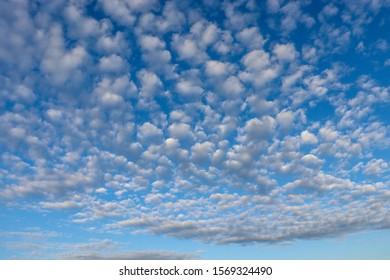 Little altocumulusclouds in the blue sky