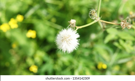 Little angels or dandelions on vegetation