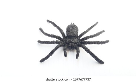 The little animals fighting in the city, insects on white ground, spider on white ground,Insects isolated for education and general,isolated insect