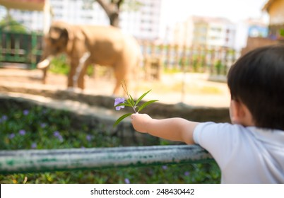 Little asian boy feeding a elephant at the zoo at the day time. Focus on hand.
