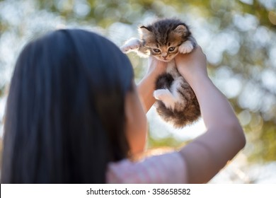 Little Asian girl holding Lovely persian kitten with sunshine in the park