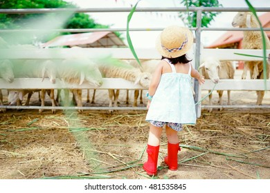Little asian girl wearing straw hat and red boots and feeding grass to sheep.