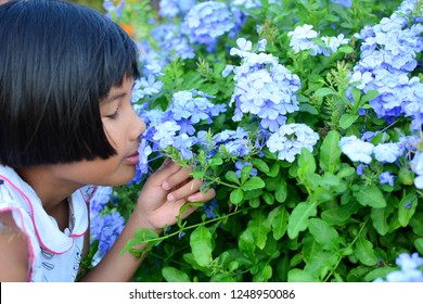Little Asian girl's eyes and smell the flowers.