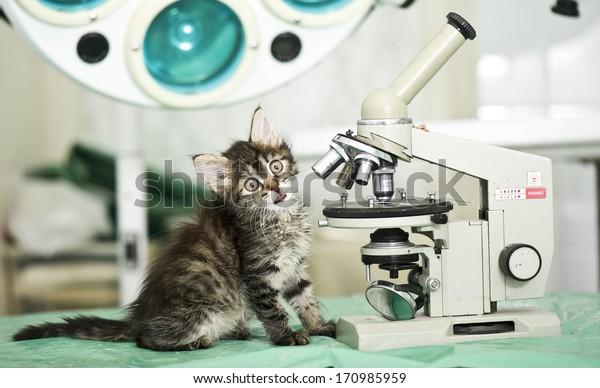 Little assistant