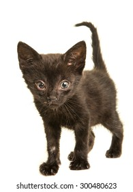 Little baby black cat with a viral infection, sneezing disease isolated on a white background