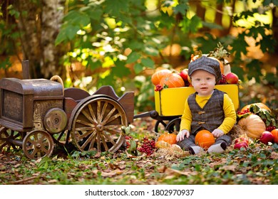 little baby boy in a tractor with a cart with pumpkins, viburnum, rowan, apples. Autumn harvest