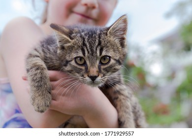 a little baby cat on the arm of a little girl