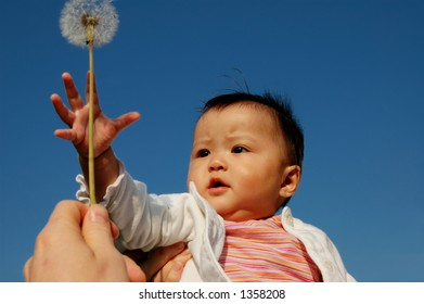 little baby girl with dandelion
