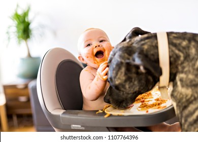 Little baby girl eating her spaghetti dinner and making a mess with pitbull lich