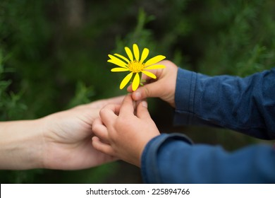 Little baby giving Yellow flower to mother
