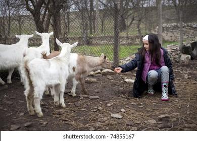 Little baby goats in the farmyard.