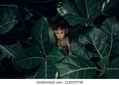 Little baby monkey in forest of Bali, Indonesia