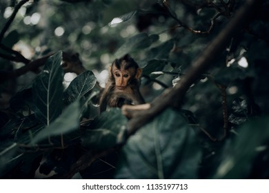 Little baby monkey on tree branch in forest of Bali, Indonesia