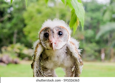 Little baby owl resting on the branch with blurred background