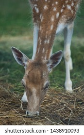 Little Bambi Fawn on the Grass
