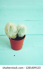 Little and beautiful cactus over a wooden table