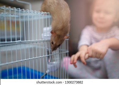 little beautiful girl child plays with a rat in a cage. Pets and children