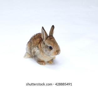 Little beautiful rabbit on white background