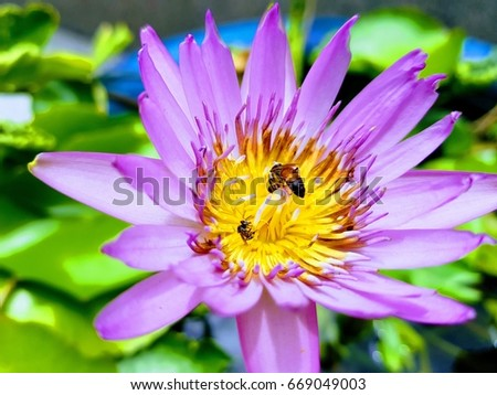 Little Bee On Lotus Flower Sign Buddhism Stock Photo Edit Now