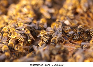 little bees in early spring time