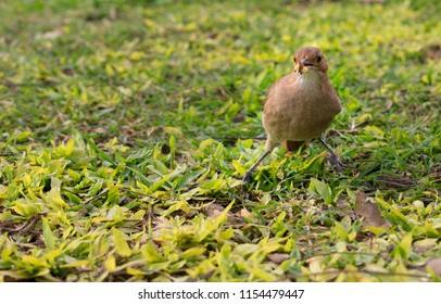 Little Bird Eathing