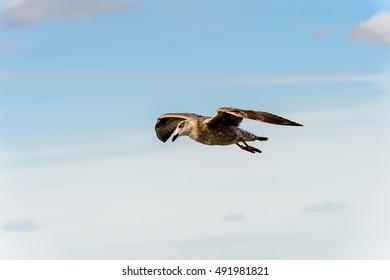 Little bird flies in the sky