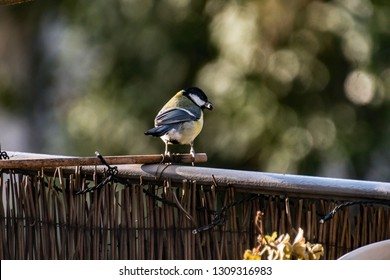 little bird in the garden