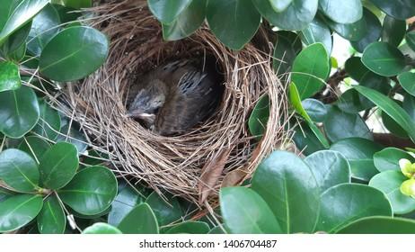 the little bird inside a brown nest