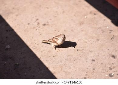 A little bird on the floor in sunshine.