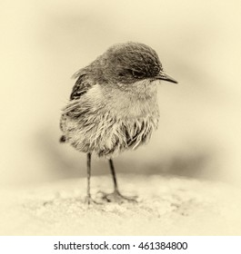 A little bird on a slopes of Kilimanjaro in bad weather - Tanzania, Eastern Africa (stylized retro)
