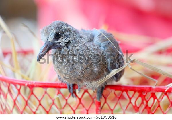 A little bird perched on a basket.