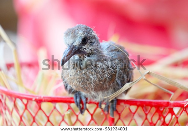 A little bird perched on a basket.