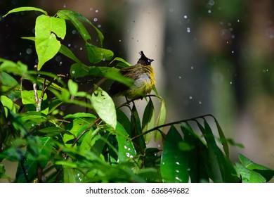 little bird in the rain