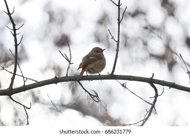 Little bird sitting on branch, in South Of Korea on winter season 2016