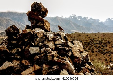 Little bird sitting at stones at mountains background