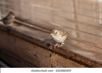 A little bird is standing on an edge of a wooden plane.