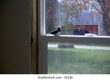 A little bird that flew into my porch