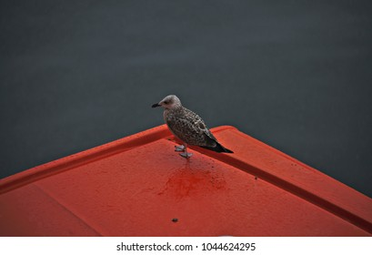 A little bird waiting on a red platform in the rain.